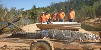 Water beast 15ft crocodile finally caught after eight-year hunt in Australia
