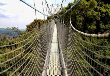 Rwanda's Nyungwe canopy walk reopens after completion of maintenance works